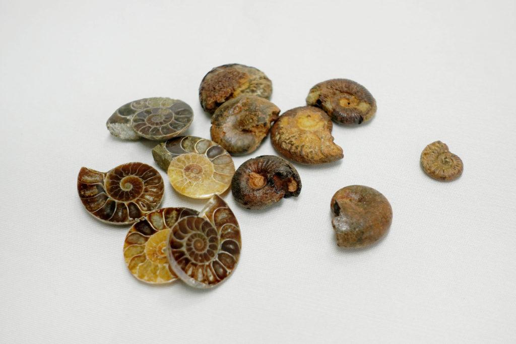地層ジオラマのオプションパーツ(アンモナイトの化石)